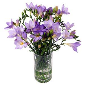 20 Lilac Freesia